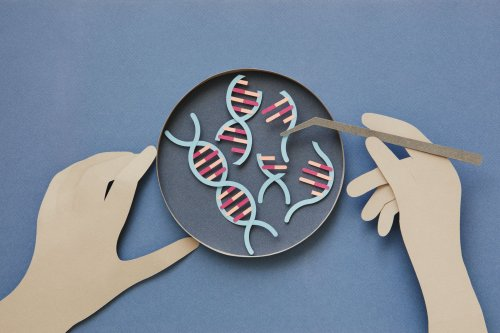 A New Clinical Trial Will Explore Gene Editing For Sickle Cell Disease