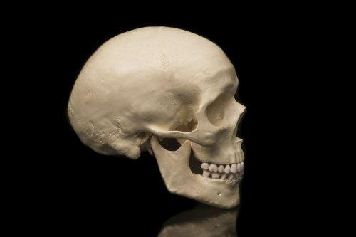 The Anatomy of the Cranium