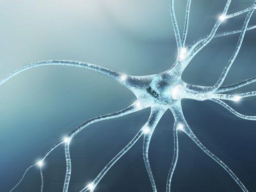 New Research Reveals How COVID-19 Gets Into the Brain