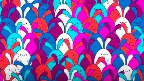 Il test dei coniglietti: riesci a trovare l'oggetto nascosto ?
