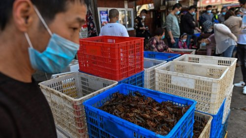 We Finally Know What Was Sold in Wuhan's Markets Before the Pandemic