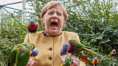 Schau dir diese verrückten Fotos von Angela Merkel im Vogelpark an