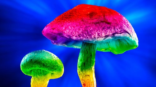 The Race to Patent Psychedelics Is Just Getting Started