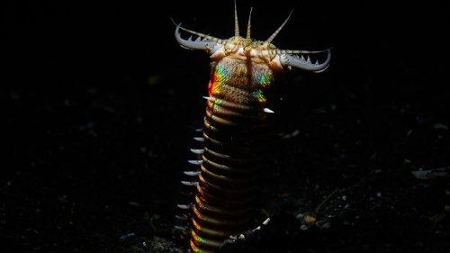 Scientists Find 20 Million-Year-Old Giant Predatory Nightmare Worm