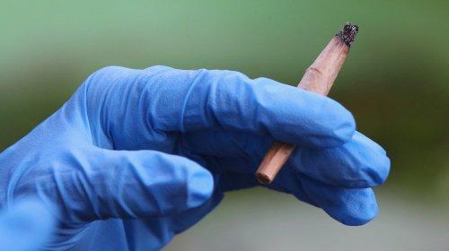 Enquanto a pandemia se arrasta, mais pessoas estão fumando mais maconha
