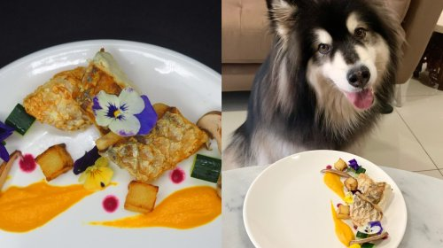 These Most Exquisite Dishes Are Actually Dog Food