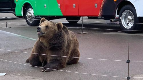 California Politician Takes Actual Bear on Campaign Trail for Some Reason