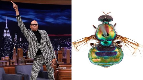 """""""Legs for Days"""": A Fly Species Has Been Named After Drag Queen RuPaul"""