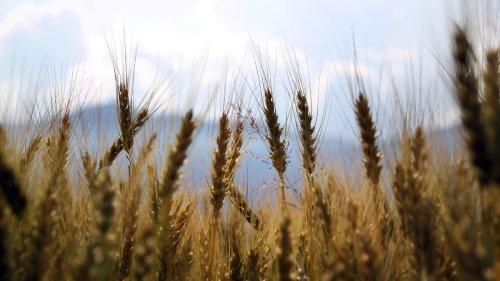L'OGM è davvero il male? L'ho chiesto a chi studia diritto agroalimentare