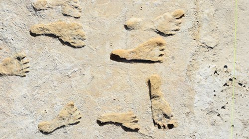 Scientists Identify Oldest Human Footprints in North America in Major Find