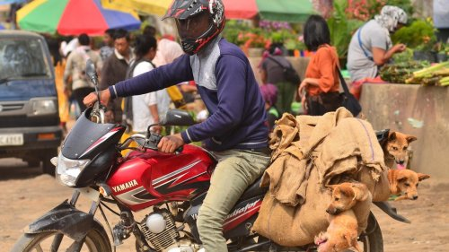 How a Dog Meat Ban in An Indian State Exposed the Country's Cultural Biases