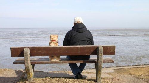 Faire vivre les chiens plus longtemps – avant que cela soit notre tour ?