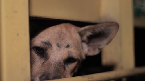 Chilling Photos and Tales Reveal the Extent of Indonesia's Dog Meat Trade