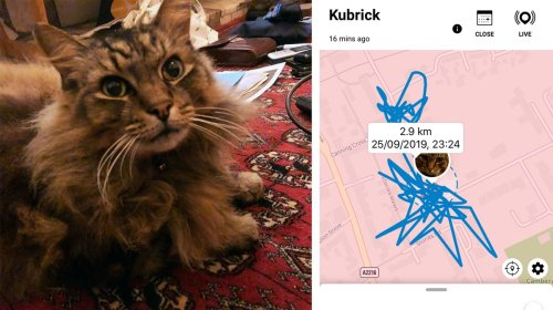 What Happens If You Give Your Cat a FitBit? Tractive IKATI Review