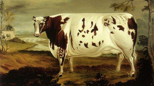 Les vaches qui côtoient les humains sont plus bêtes que les autres