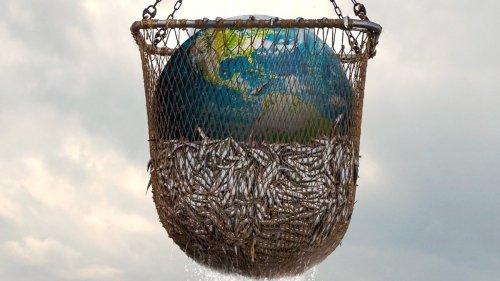 Due esperti ci spiegano meglio il documentario Netflix sulla pesca intensiva