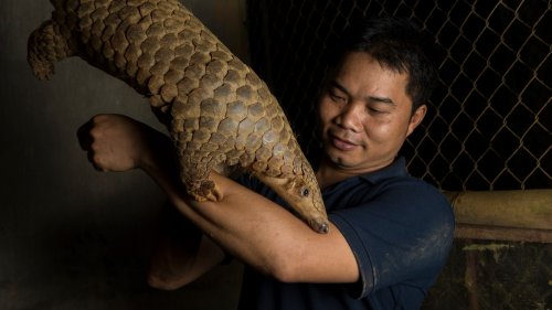 We Talked to Vietnam's 'Pangolin Protector' About the World's Most Trafficked Animal