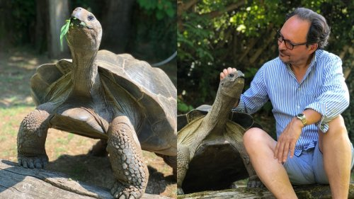 We Asked Giant Tortoise Owners: Why?
