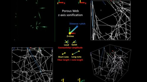 Scientists Turned Spiderwebs Into Music, And It's Hauntingly Beautiful