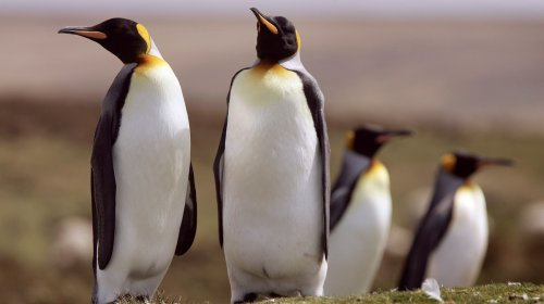 Scientists Dug Through 5,000 Years of Penguin Poo And Found a Chilling Warning