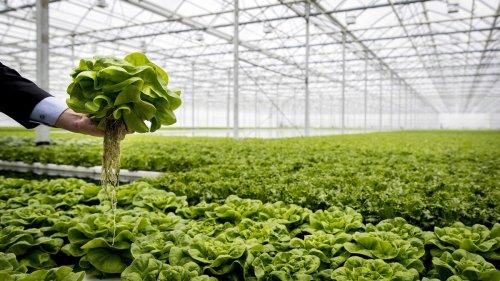 Le piante modificate geneticamente per combattere il cambiamento climatico