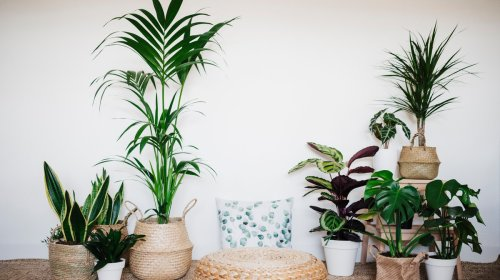 Here's How to Make Your Home a Happy Plant Haven