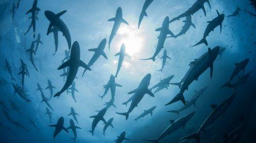Hubo una extinción masiva de tiburones y no sabemos la razón