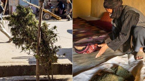 J'ai vécu deux mois avec les cultivateurs de cannabis en Afghanistan