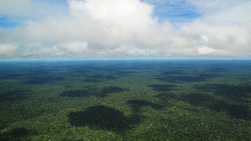 Será que plantar 'bilhões de árvores' vai parar as mudanças climáticas?