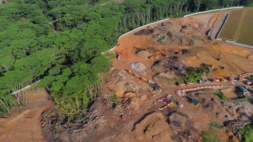 How Did Singapore Clear a Giant Forest Reserve 'By Mistake'?