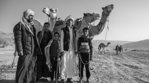 Fotos alegres de una tradicional carrera de camellos en Egipto