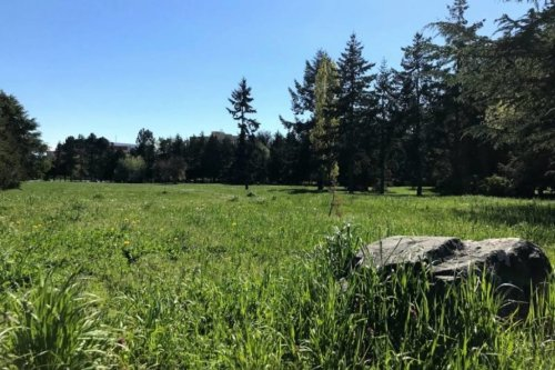 Kings Park advocates call on Saanich to extend fundraising deadline, contribute $1.75 million to save greenspace