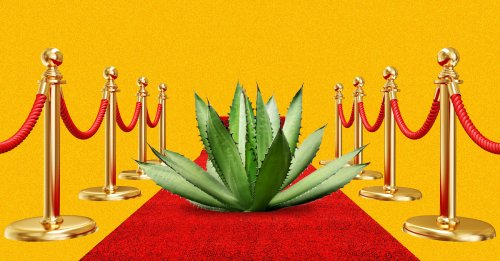 The 10 Best Celebrity Tequilas, Tasted and Ranked