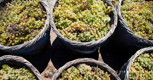 From Cliff to Crete, Greek Wines Are Worth Exploring