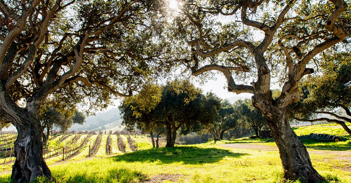 The Ultimate Winery Guide: Every Place to Visit in Napa, Sonoma, and Carmel-by-the-Sea
