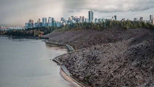 Altered images show what Stanley Park and Capilano Park would look like after logging
