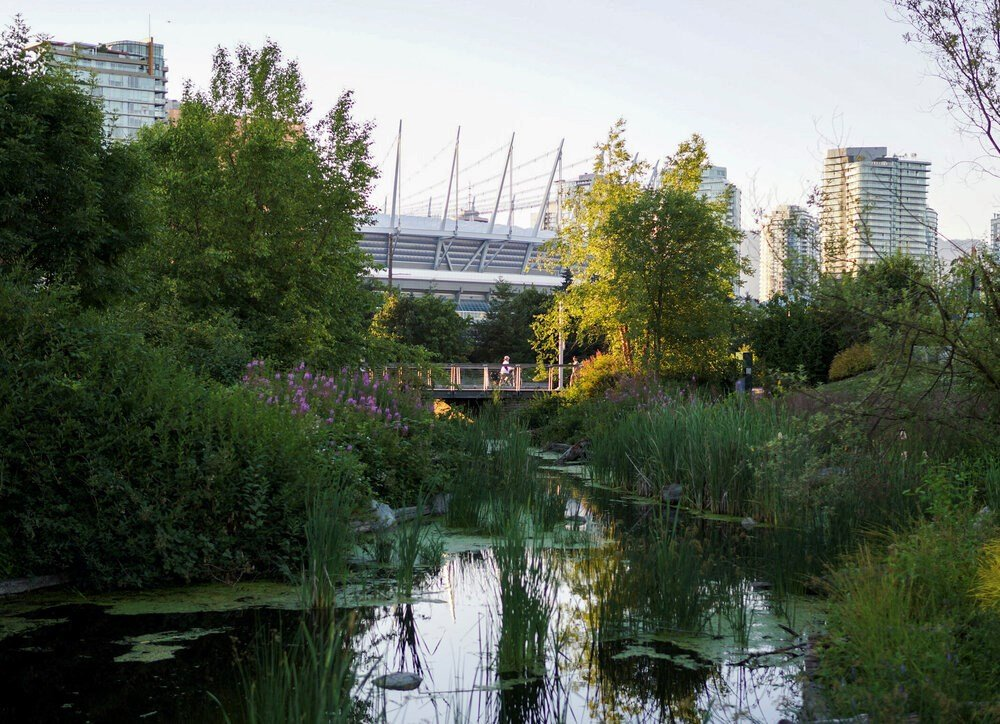 How Vancouver is protecting itself from future flooding — with plants