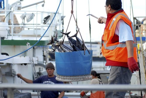 Hawaii Fishermen Concerned Over Growing Chinese Presence