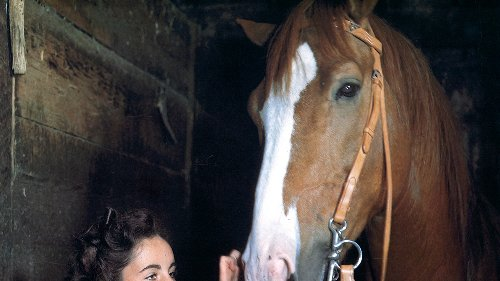 8 Eye-Opening Facts From The Set Of 'National Velvet', The Film That Made Elizabeth Taylor A Star