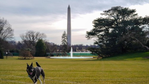 The First Dogs Have Arrived at the White House, Complete With Their Own Twitter and Instagram Accounts