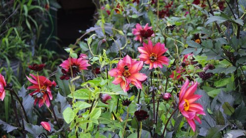 How to Grow a Garden in Even the Smallest of Spaces