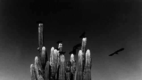 Graciela Iturbide, le Mexique et la grâce