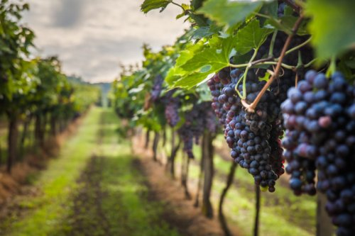Winemakers, Lawmakers Discuss the Industry's Challenges