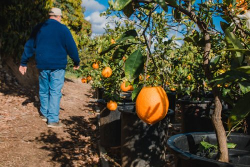 Farmworkers Confront Losses, Anxiety Despite Demand for Food