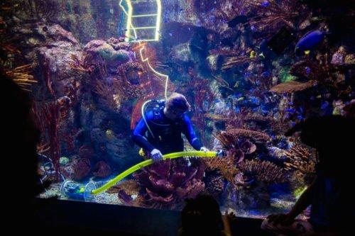 Empty Aquarium Is Good News for Shy Fish