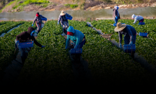 Latina farmworkers speak out about the hazards of life in California's fields