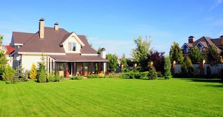 Your Toughest Lawn Questions Answered