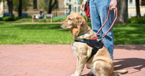 How do blind people pick up after dogs?