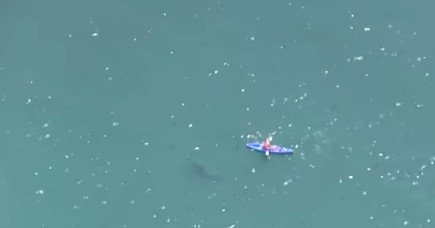 This video of a kayaker being circled by a shark is terrifying