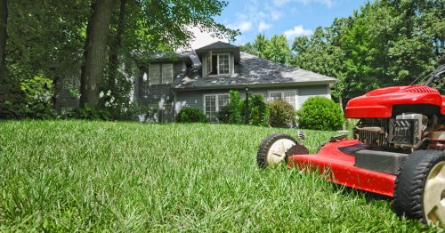 Everything You Need to Know to Grow a Lush Lawn